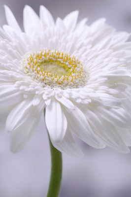 flores Tanatorio Pamplona