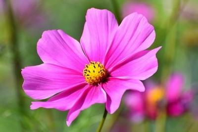 Envío de flores al tanatorio San Alberto de Pamplona