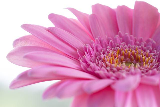 Servicio de envío de flores funerarias